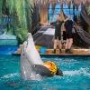 Дельфинарии, океанариумы в Ленинском